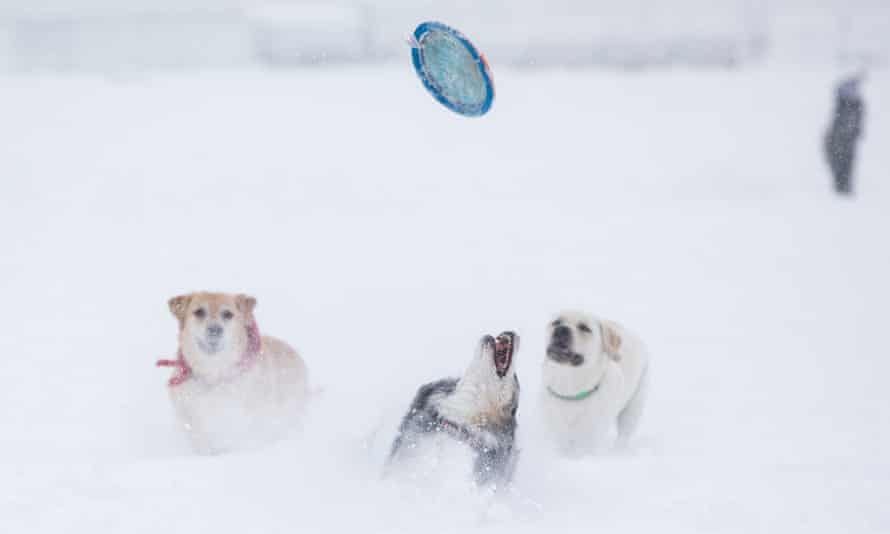 Dogs play with a frisbee in Boston, Massachusetts, on 17 December.