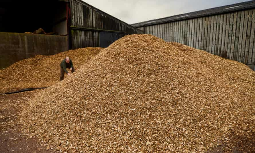 Willow chippings provide fuel to help power the paper mill.