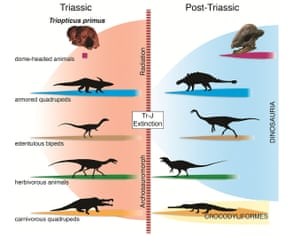 Convergent evolution between Triassic animals (left) and those that came later (right)