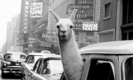 From llamas to lefties: the intrepid Inge Morath – in pictures