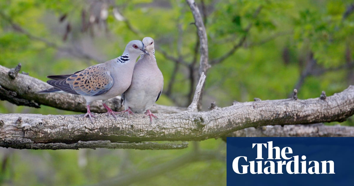 Spain imposes one-year ban on shooting of at-risk turtle dove