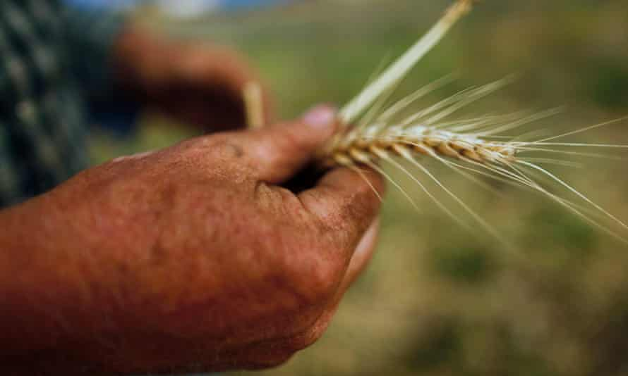 Australia is set to receive the first bulk import of grain since the millennium drought.