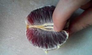 A still from Stephanie Sarley 'fruit art' video.