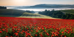 Field of Red, Houghton, West Sussex