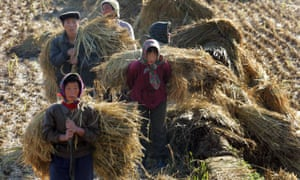 North Koreans work on a rice field outside Pyongyang.