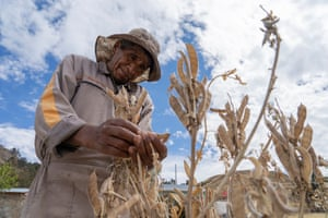 Juan Callo inspects his last crop of his tarwi, a nutritious Andean bean. By August, most crops have been harvested, leaving residents to survive on supplies stored in their homes.
