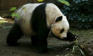 Jia Jia is said to be still mobile but suffering from high blood pressure