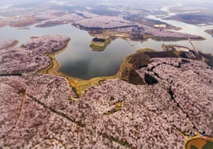 An aerial view shows a sea of cherry blossoms, magnolia flowers and rape flowers around Hongfeng Lake in China