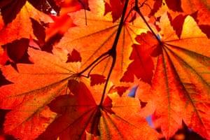 Autumn leaves on Wimbledon Common, London, England, UK