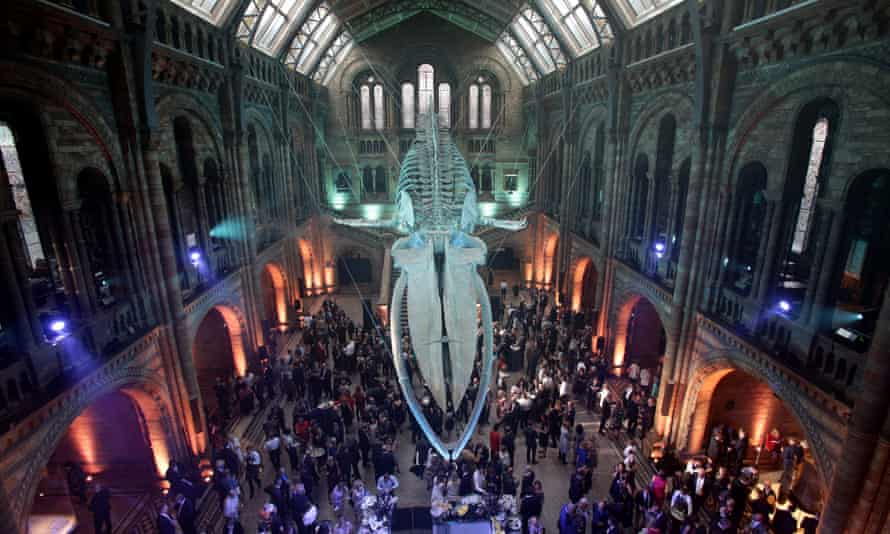 Inside the Natural History Museum, London