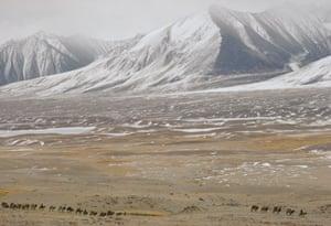 Kyrgyz caravan.