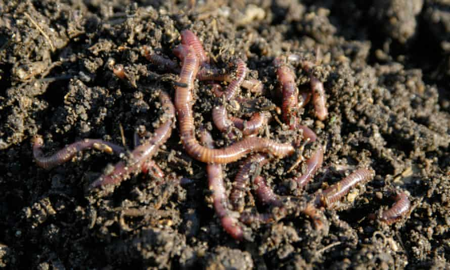 Australian physicists win Ig Nobel prize for research showing worms move like water