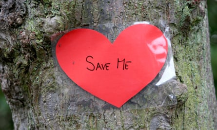 A tree identified for felling by Sheffield city council wears a heart saying 'Save me'