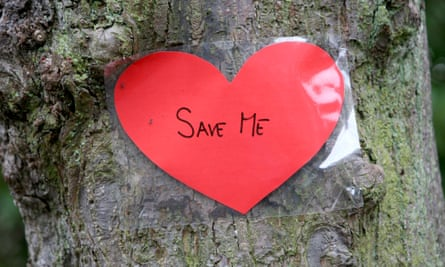 'Save me' sign on tree in Sheffield