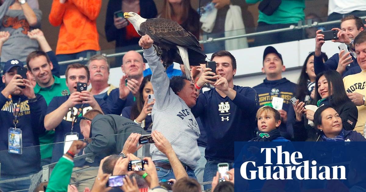 The eagle has landed: Clark the Cotton Bowl mascot descends on fans