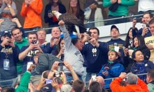Clark the bald eagle lands on a fan's arm.