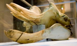 Thames whale skull, from Whales: Beneath the Surface, at Natural History Museum.