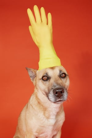 Photographs by Alex Grace of her dog Luna wearing household products taken during the coronavirus lockdown.