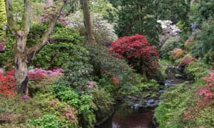 Rhododendrons light up the dell garden at Bodnant