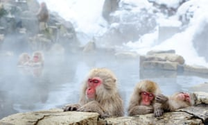 Japanese macaques in the hot springs of the mountains of Nagano