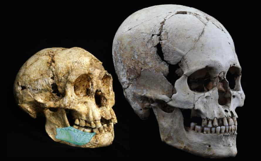 Image of the SOA-MM4 mandible superimposed on the Homo floresiensis skull (LB1) and compared with a modern human skull from the Jomon Period of Japan