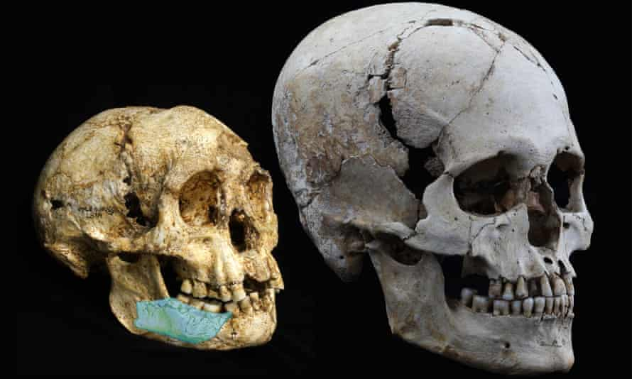 The Homo floresiensis 'hobbit' skull compared with a modern human skull.