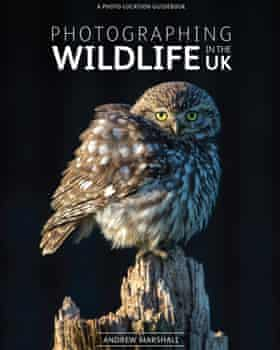 Book cover of Photographing Wildlife in the UK by Andrew Marshall.
