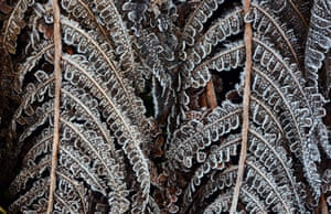 Frost on vegetation