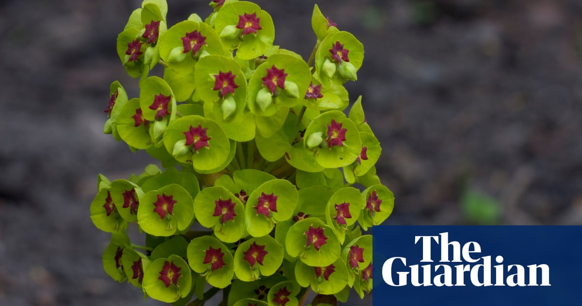Alys Fowler Euphorbias Are I Admit Handsome Things Life And