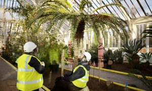 Kew Gardens Temperate House To Reopen After 163 41m