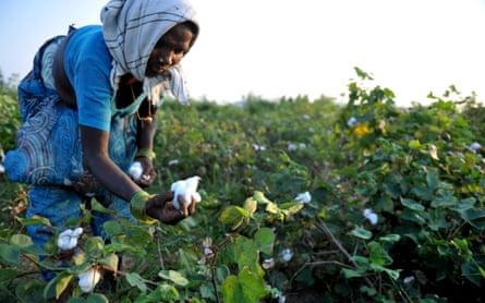 Female cotton farmer