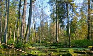 Bialowieza Forest, Poland.