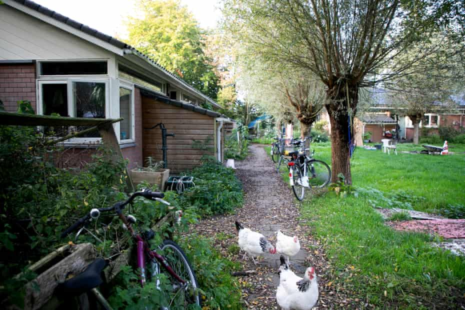 Chickens on a path by housing