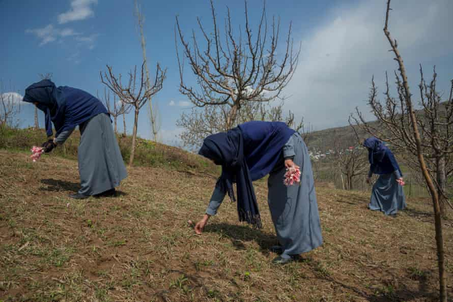 """Girls picking wild tulips in an apple orchard in the vicinity of their school. Most of them compare this particular experience with the reopening of their school and call it a """"new spring."""" """"We hope 2021 is a better year,"""" they said"""