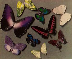 Butterflies 1935; Man Ray (US, 1890-1976), Carbro print