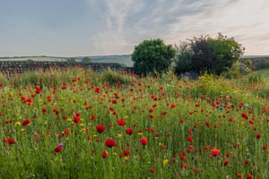 Poppies in a meadow at Old Erringham, Sussex