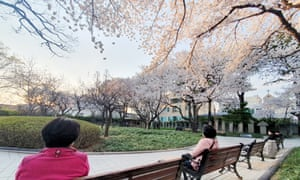People in Daegu practice social distancing while enjoying the warm spring sun and blooming flowers at Gyeongsanggamyeong Park, South Korea, 25 March 2020.