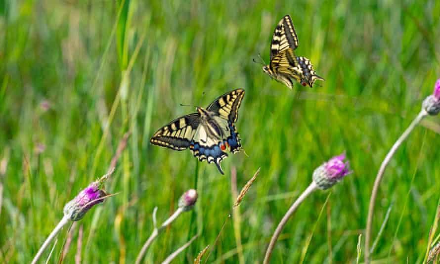 Butterflies, plants and grass