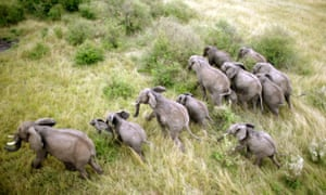 Elephants from above in Equator from the Air.