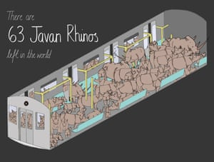 This diagram is one of a series showing seven endangered species that could (almost) fit in a single train carriage. There are approximately 63 Javan Rhinos left in the world
