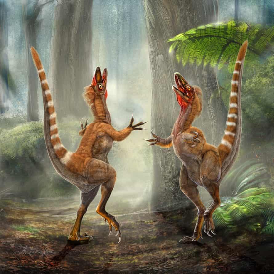 Sinosauropteryxes resplendent in their ginger and white stripes.