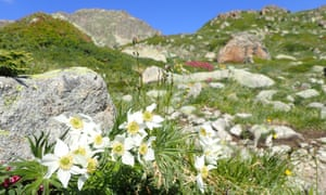 In summer, the mountainsides are covered in wildflowers.