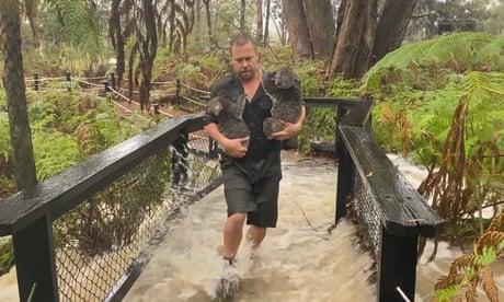 Staff beat back alligators with broom as Australian Reptile Park floods – video