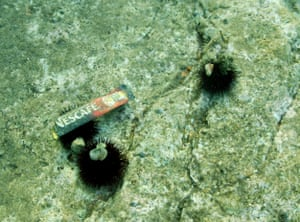 An urchin grabs on to a discarded coffee packet, in the Mediterranean, 2006