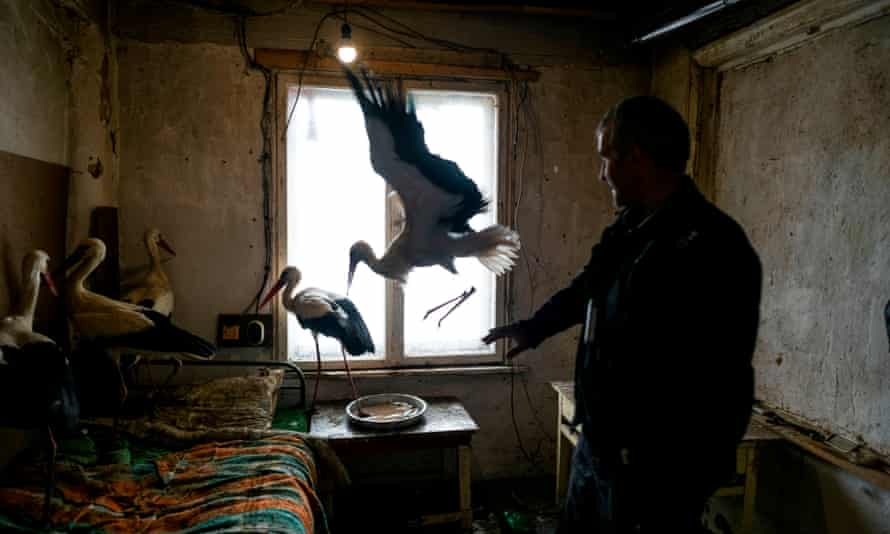 Safet Halil stands next to the five storks he saved in the village of Zaritsa, Bulgaria