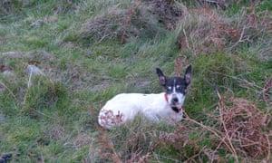 Phoebe, Jim Perrin's little terrier.