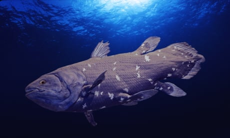 Older than dinosaurs: last South African coelacanths threatened by oil exploration
