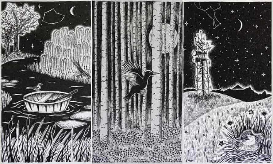 The Dart, Midnight Sun and Witching Hour illustrations by Tiffany Francis-Baker from her book, Dark Skies.