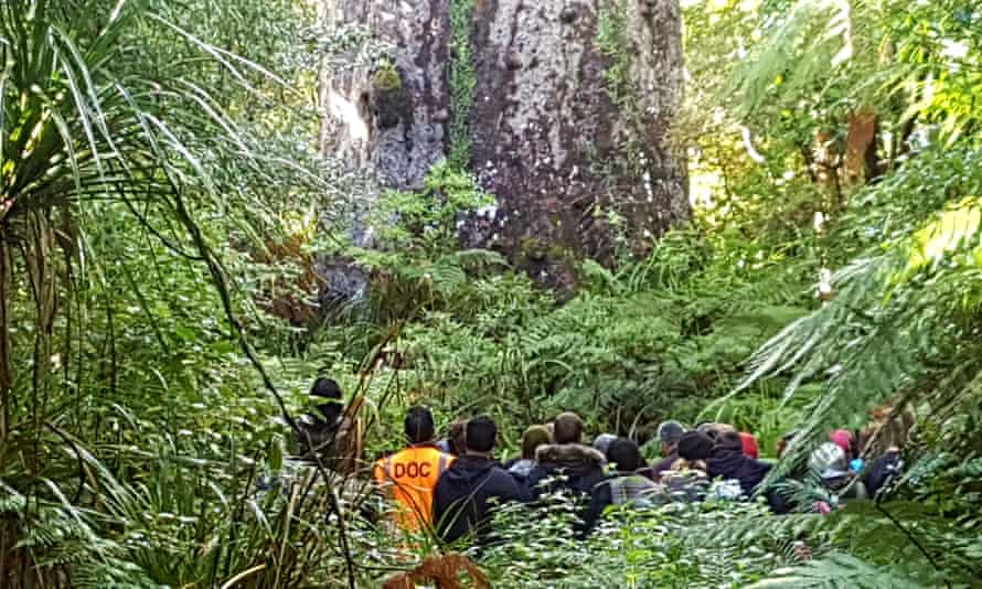 A blessing ceremony held for Tāne Mahuta in the Waipoua forest of Northland, New Zealand.