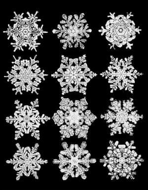 Wilson Bentley's snowflake photos circa 1902